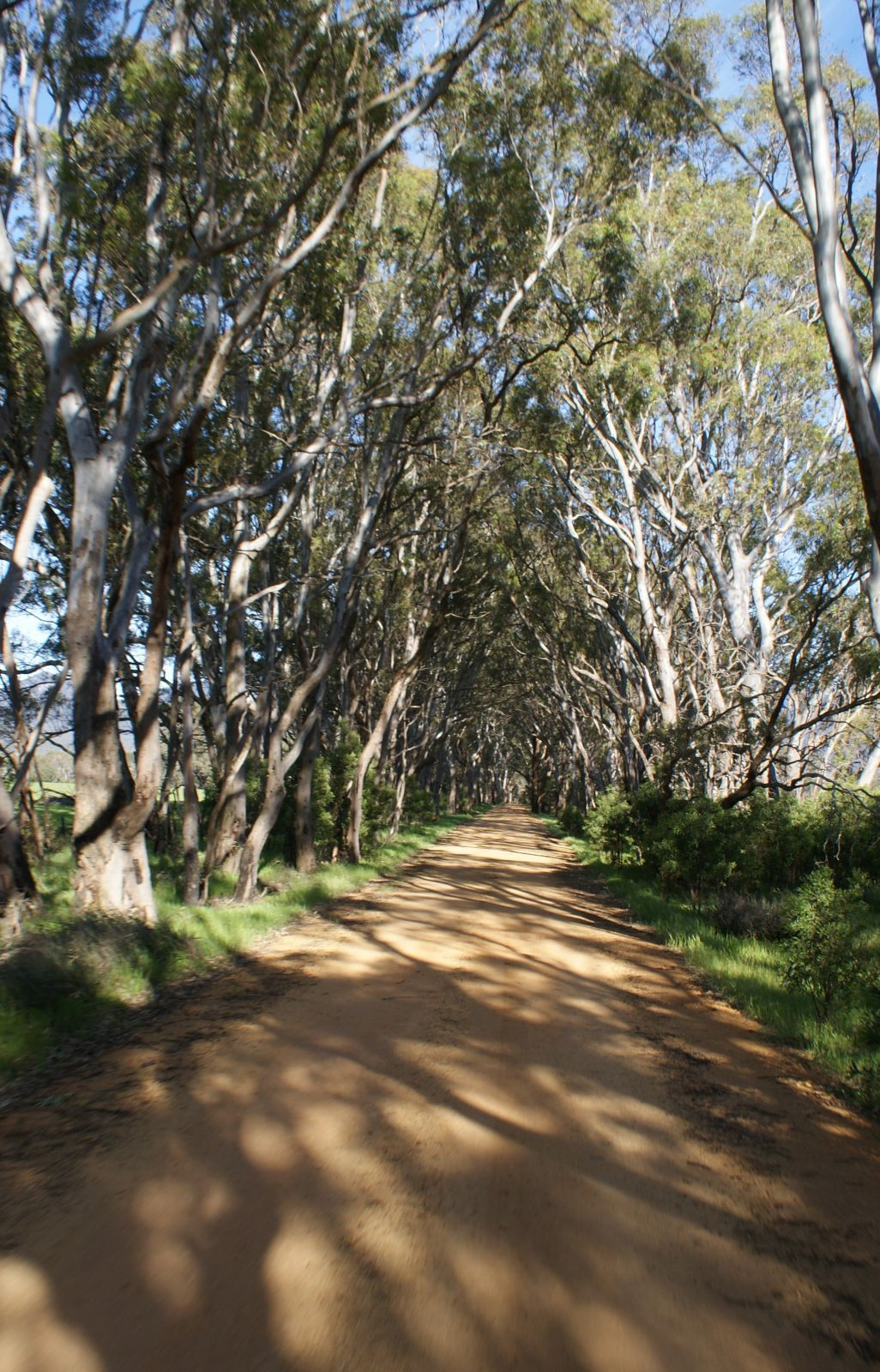 Awesome country laneway's near Grampians NP